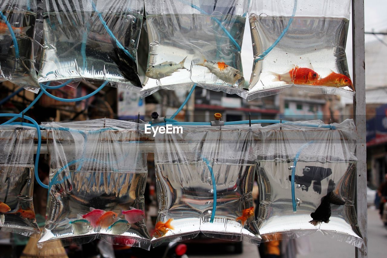 Close-Up Of Fish In Plastic Bags