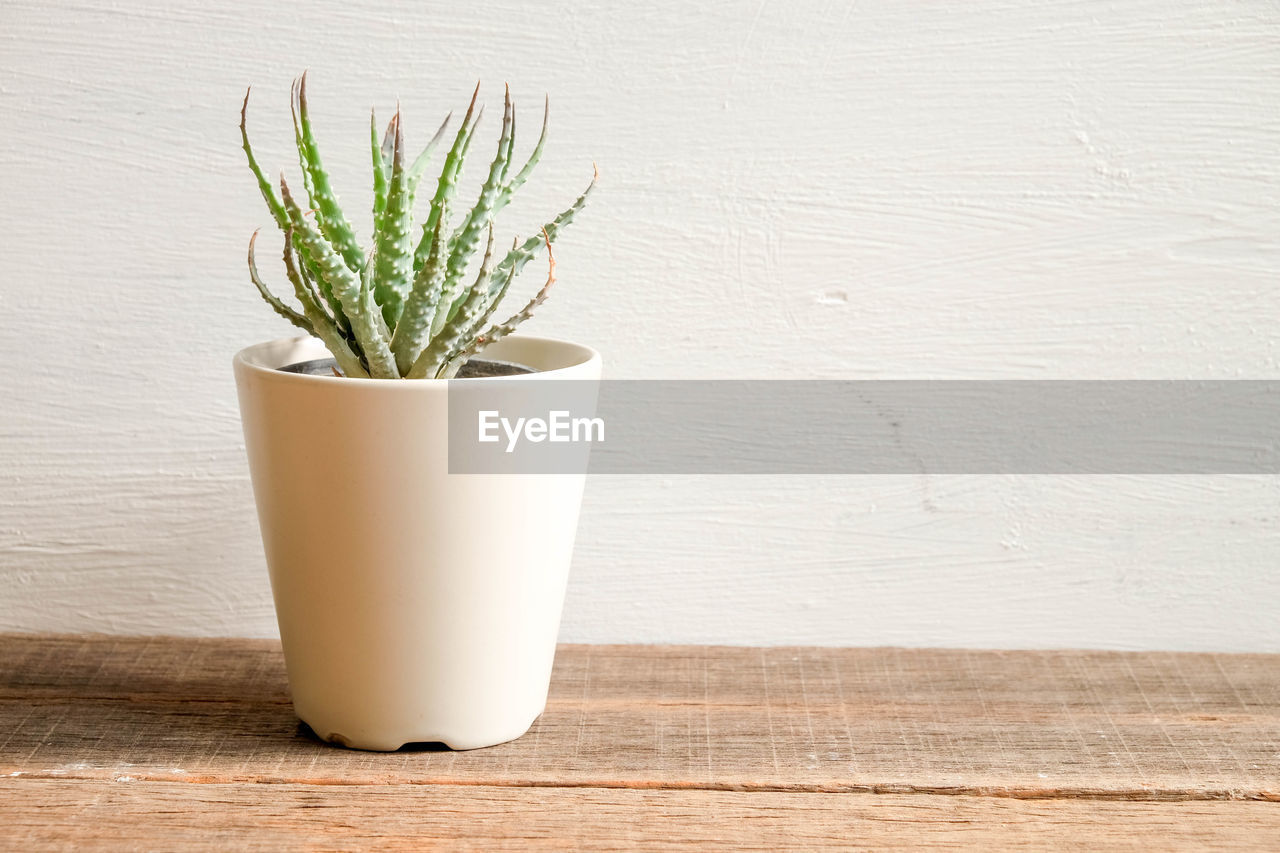 potted plant, plant, table, wood - material, indoors, growth, wall - building feature, no people, white color, still life, succulent plant, close-up, green color, nature, leaf, freshness, cactus, plant part, houseplant