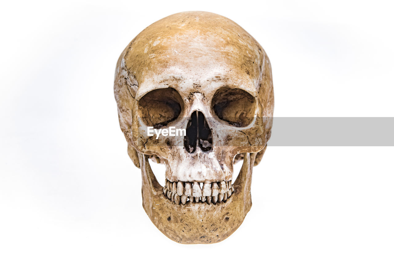 Close-up of human skull against white background