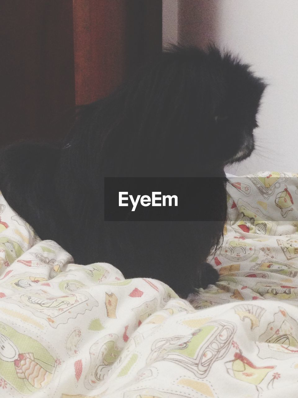 pets, domestic animals, indoors, one animal, mammal, bed, animal themes, black color, dog, no people, bedroom, close-up, day