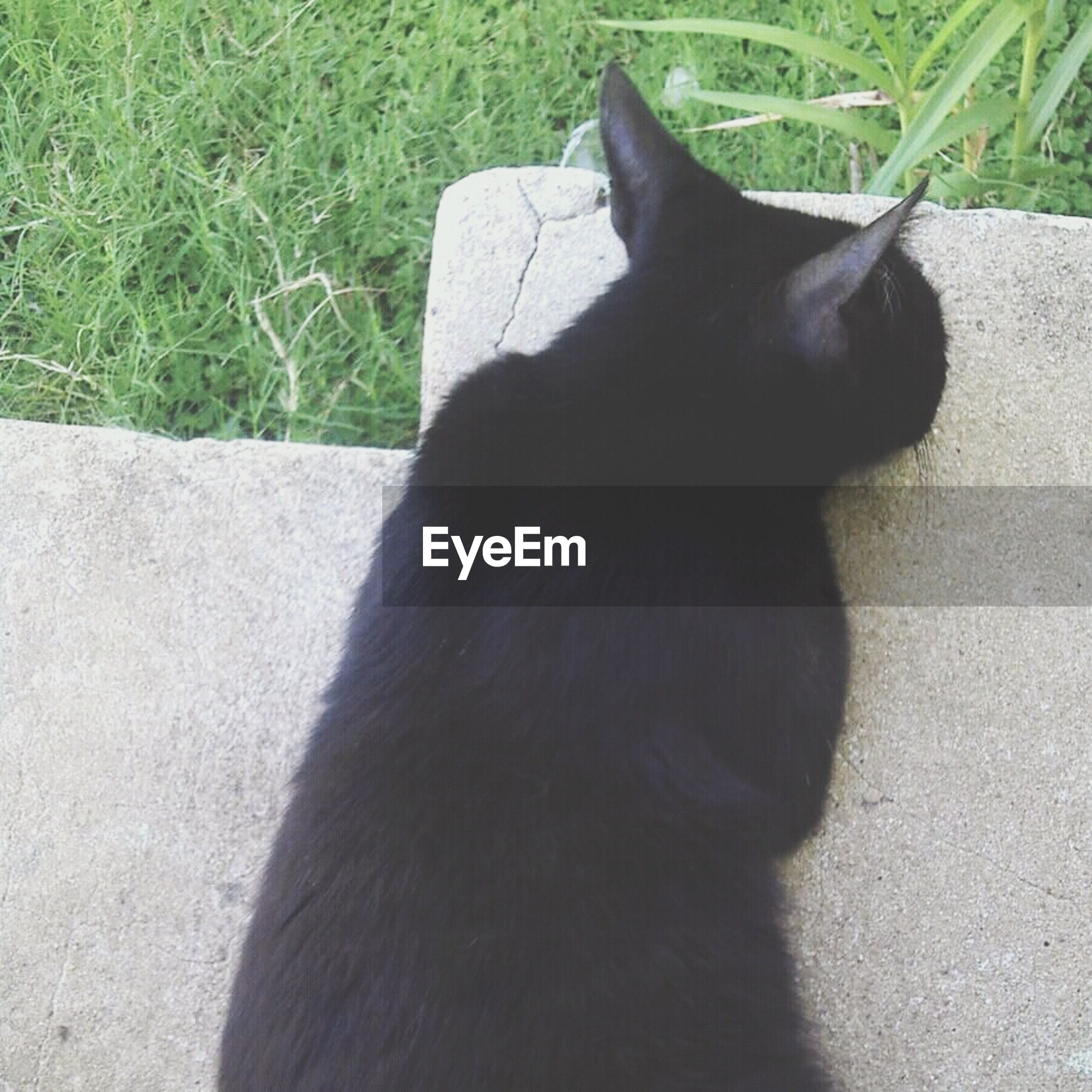 animal themes, domestic animals, one animal, mammal, pets, black color, grass, domestic cat, relaxation, field, cat, feline, animal head, close-up, outdoors, no people, day, whisker, sitting, high angle view