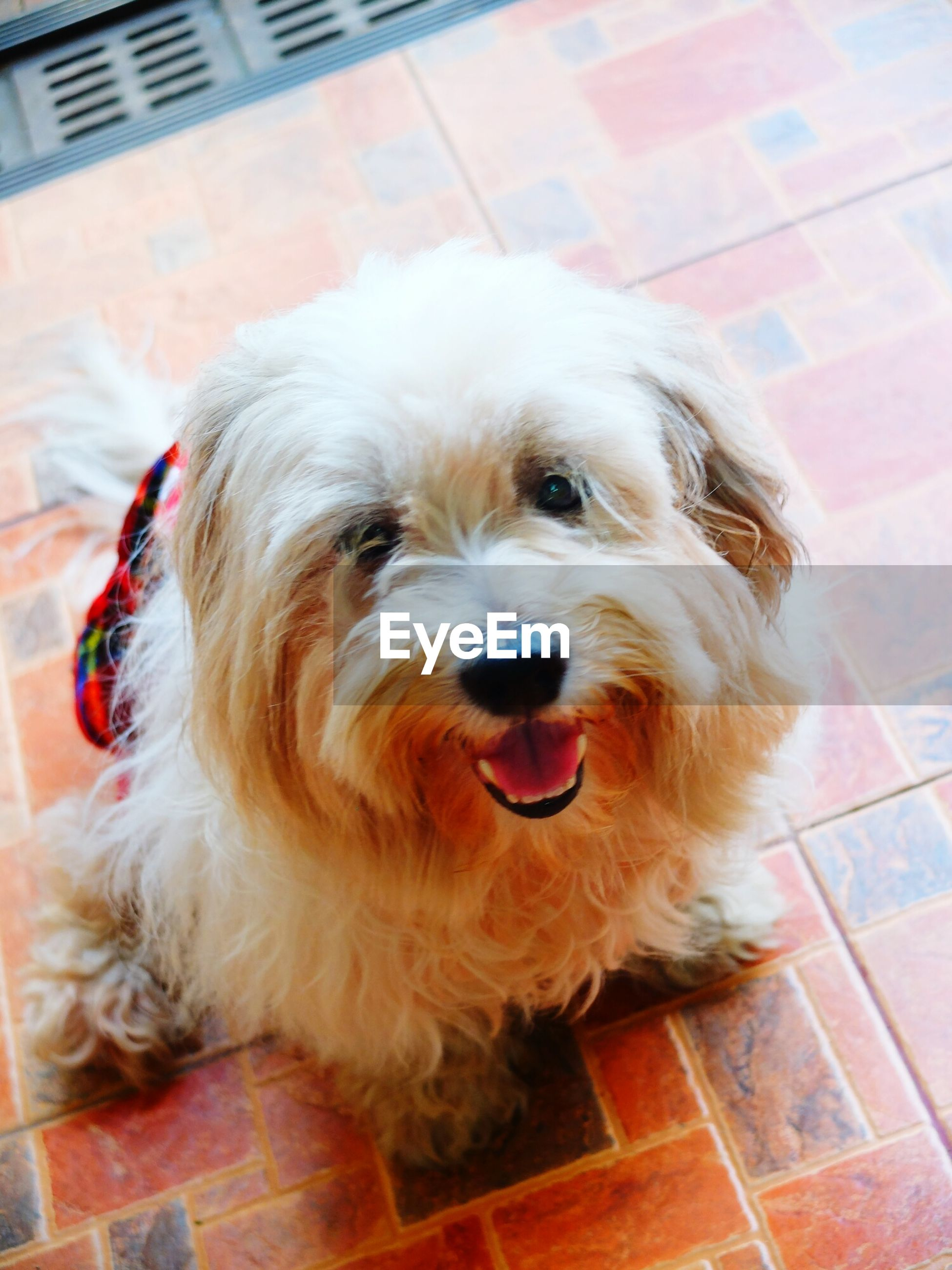 dog, pets, one animal, domestic animals, mammal, animal themes, looking at camera, portrait, indoors, no people, close-up, day
