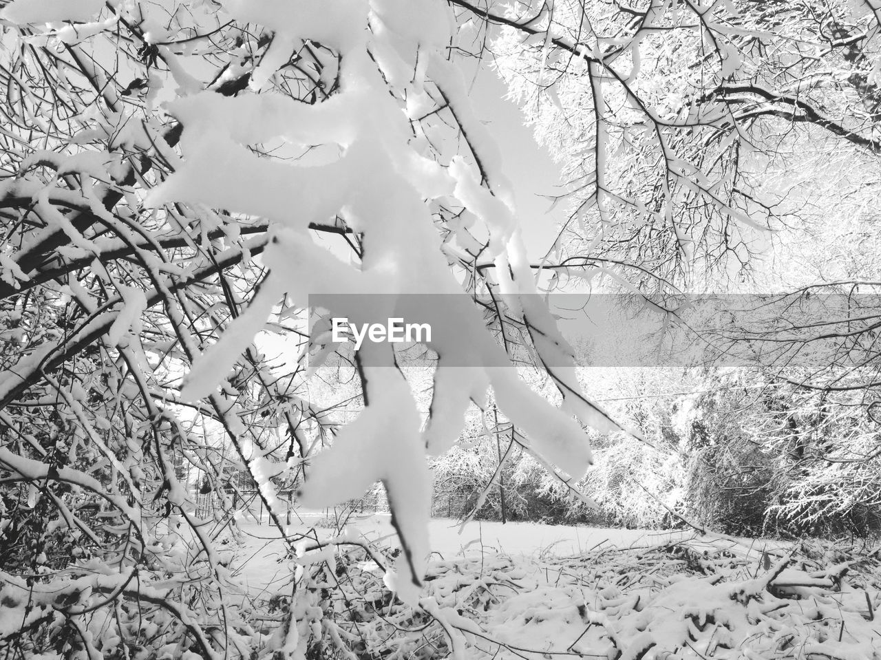tree, branch, no people, bare tree, day, nature, outdoors, beauty in nature, close-up