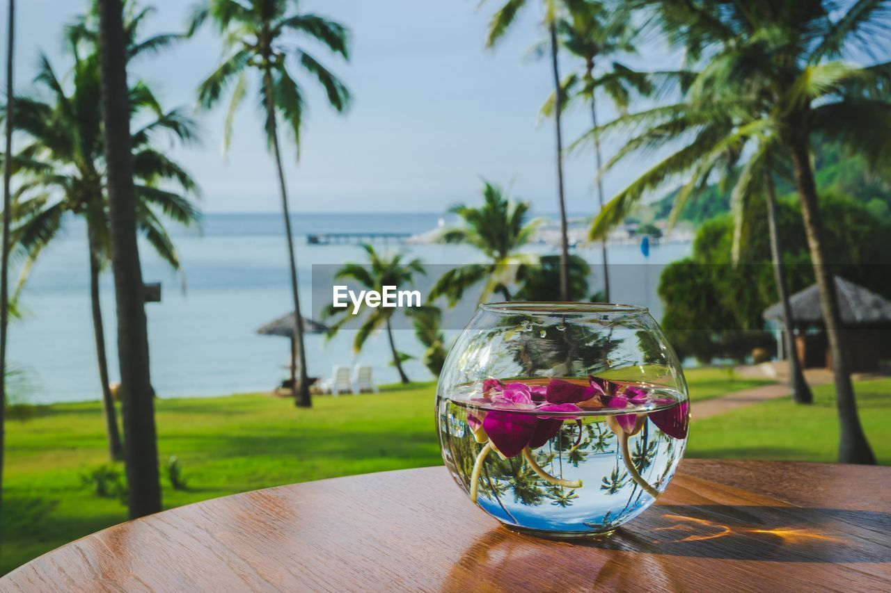 plant, water, food and drink, nature, freshness, table, tree, focus on foreground, sea, drink, glass - material, refreshment, glass, no people, drinking glass, palm tree, transparent, food, sky, outdoors