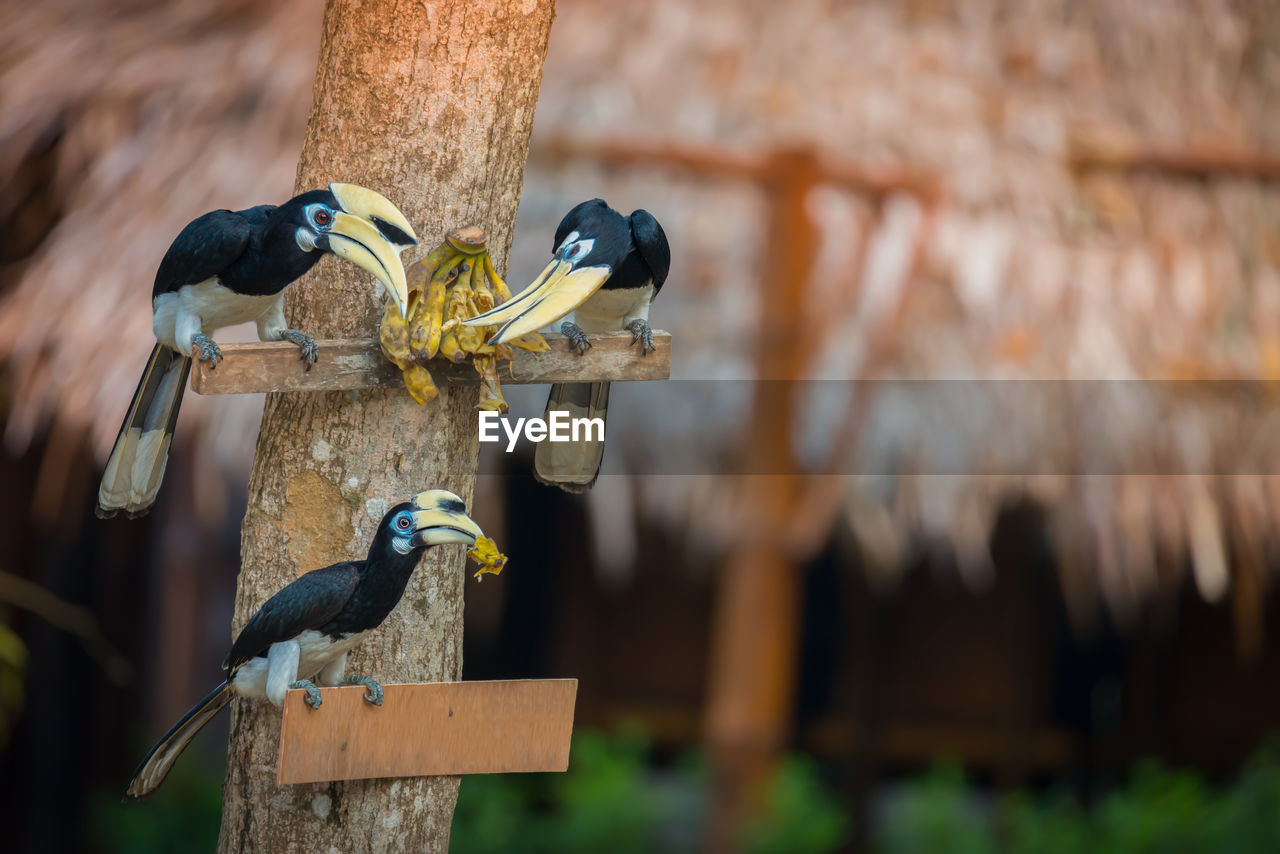 Close-up of birds eating banana
