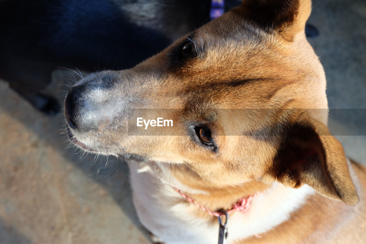 CLOSE-UP OF DOG LOOKING AWAY OUTDOORS