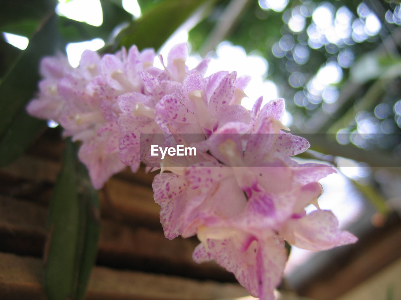 flower, growth, beauty in nature, fragility, nature, freshness, pink color, petal, no people, outdoors, springtime, close-up, day, plant, flower head, blooming, tree