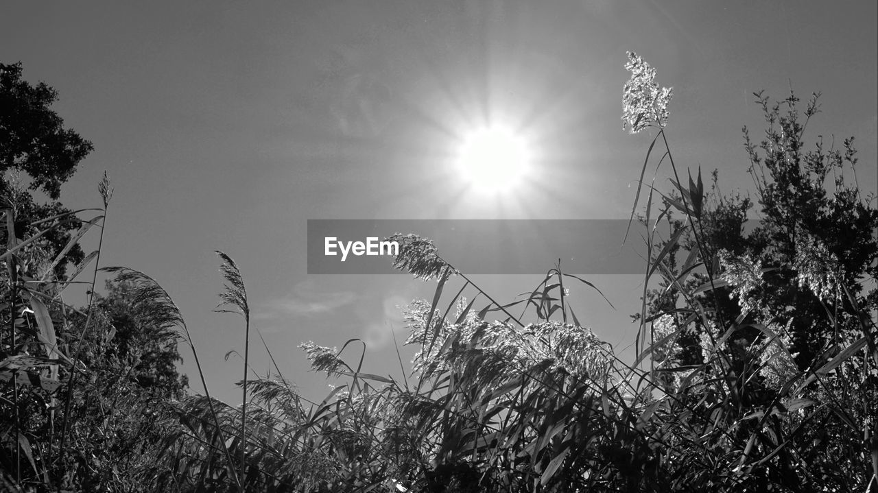 plant, sky, sun, growth, sunlight, nature, beauty in nature, tranquility, no people, lens flare, low angle view, sunbeam, field, day, land, bright, outdoors, tranquil scene, flower, sunny, stalk