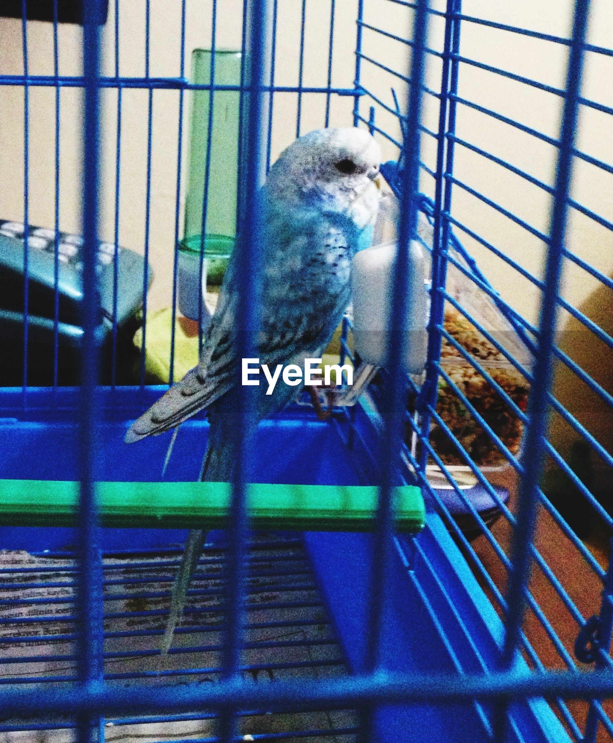 indoors, animal themes, one animal, cage, glass - material, animals in the wild, window, wildlife, bird, animals in captivity, transparent, full length, built structure, reflection, day, low angle view, architecture, no people, pattern, perching
