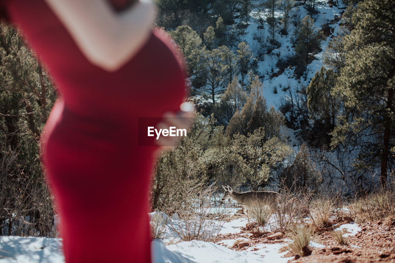 Midsection of pregnant woman touching abdomen while standing against trees during winter