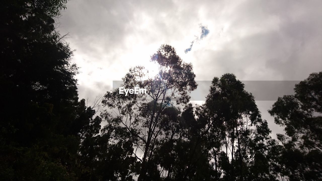 tree, low angle view, nature, forest, growth, sky, outdoors, no people, day, beauty in nature, tranquility, plant, scenics, high