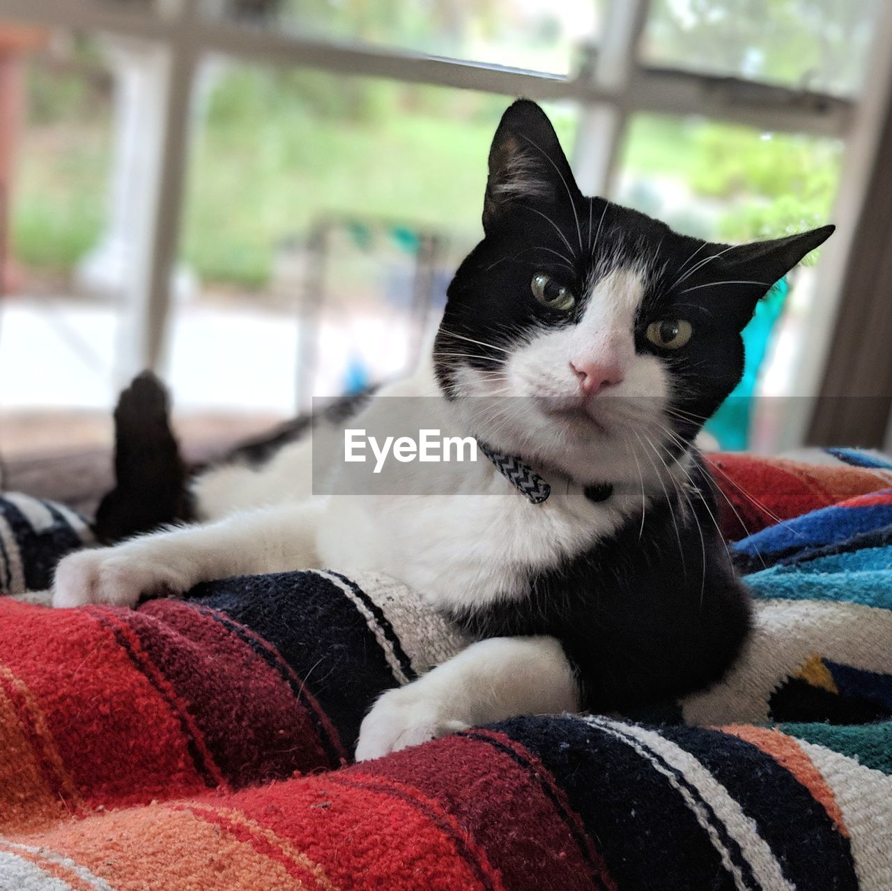 pets, domestic, domestic animals, animal themes, mammal, animal, one animal, cat, domestic cat, vertebrate, feline, relaxation, furniture, portrait, looking at camera, indoors, close-up, home interior, no people, focus on foreground, whisker, animal head