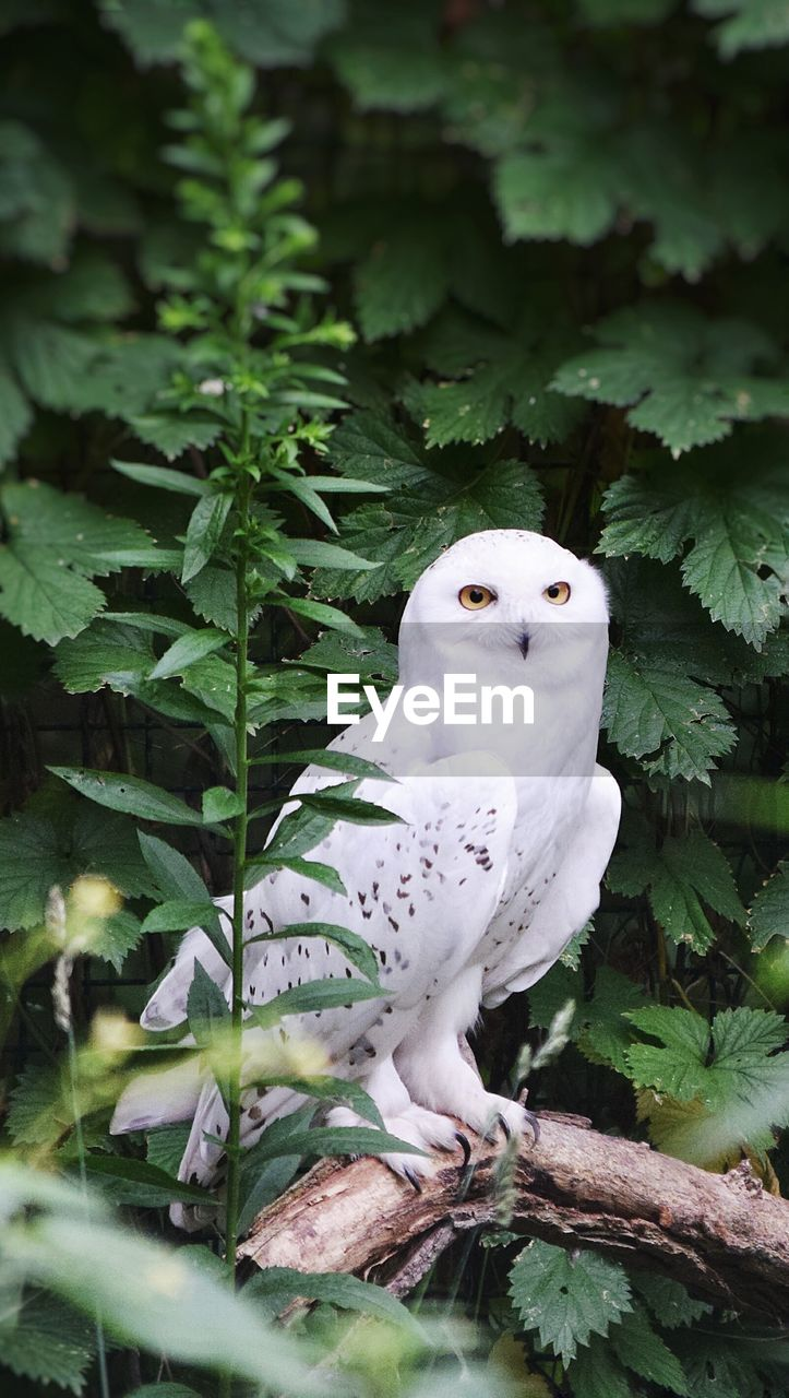 one animal, animal, vertebrate, plant, animal themes, animals in the wild, animal wildlife, bird, nature, plant part, tree, leaf, green color, growth, no people, day, white color, outdoors, owl, close-up
