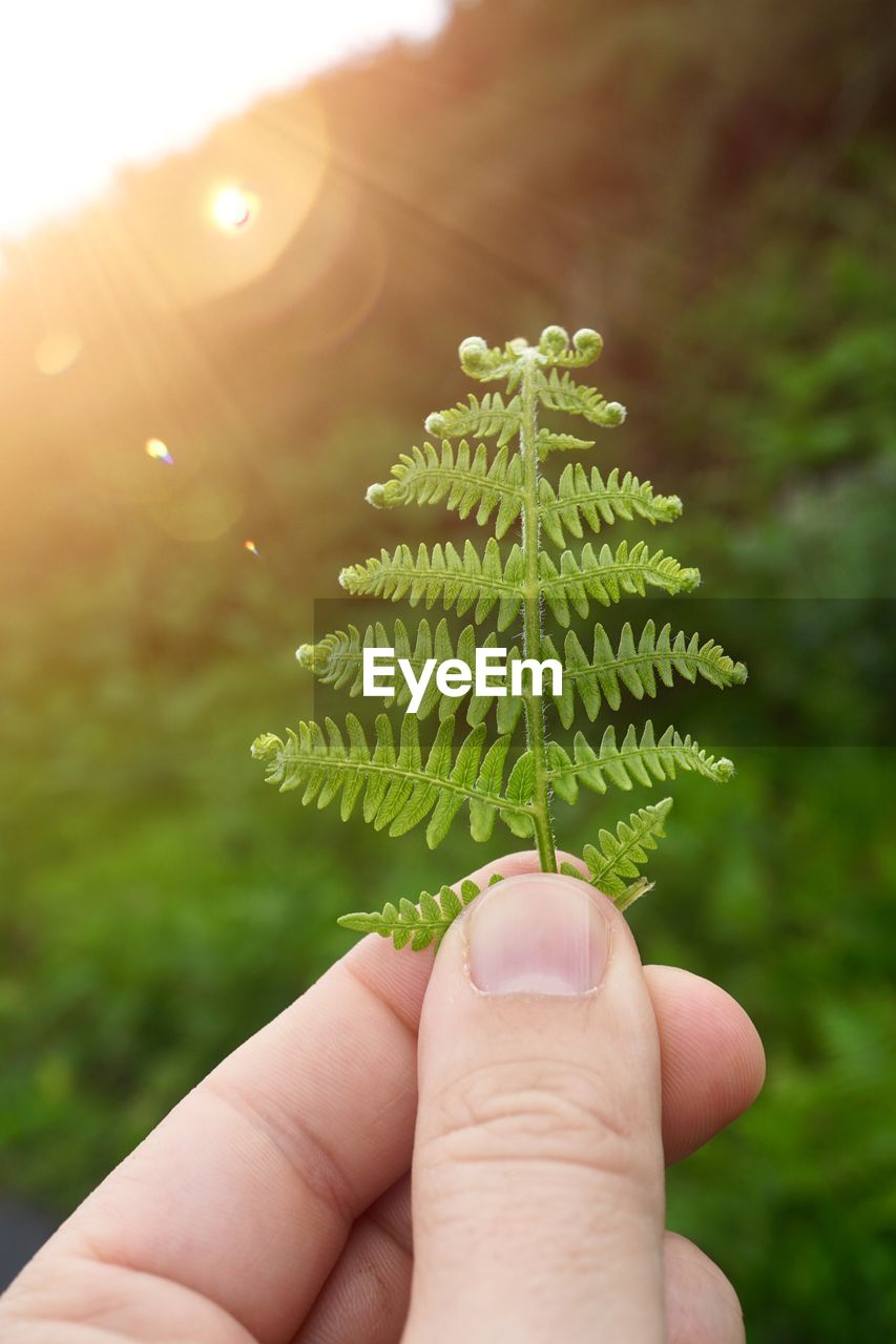 human hand, hand, one person, human body part, real people, finger, human finger, body part, unrecognizable person, holding, green color, plant, close-up, focus on foreground, nature, day, personal perspective, sunlight, growth, lifestyles, outdoors