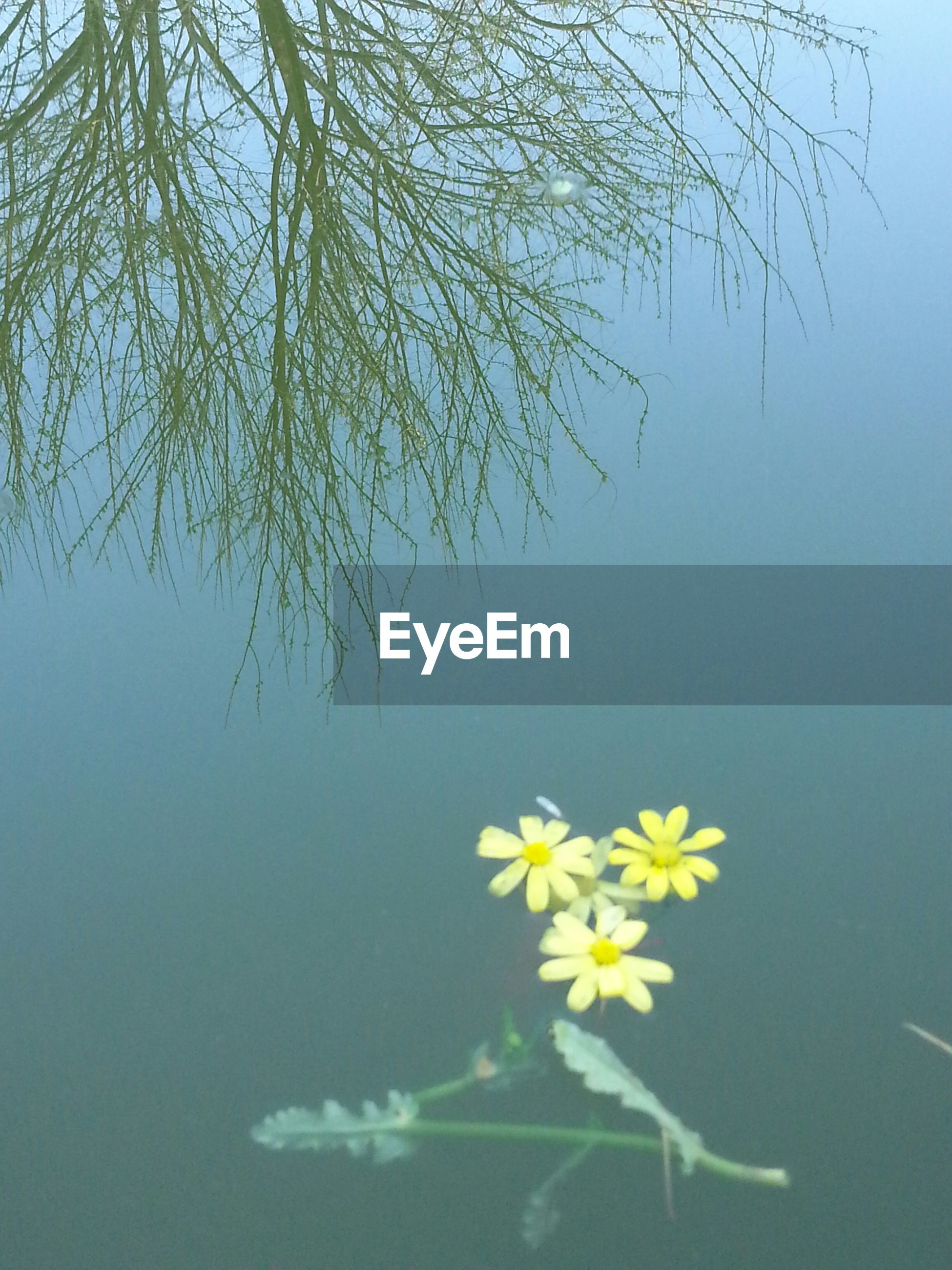 flower, water, beauty in nature, growth, nature, freshness, fragility, petal, branch, lake, plant, leaf, reflection, waterfront, tree, tranquility, yellow, pond, blooming, no people
