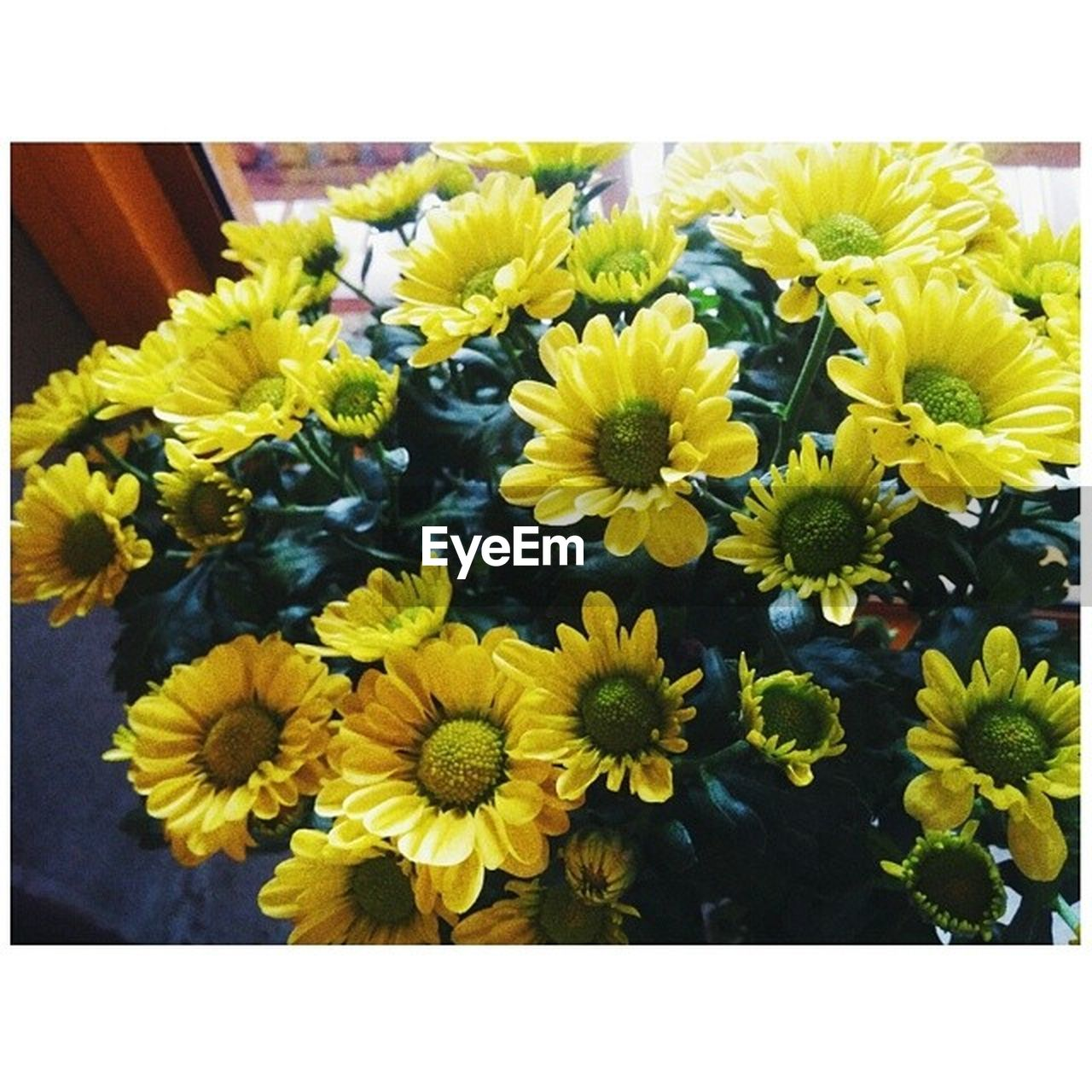 Close-up of yellow flowers by window