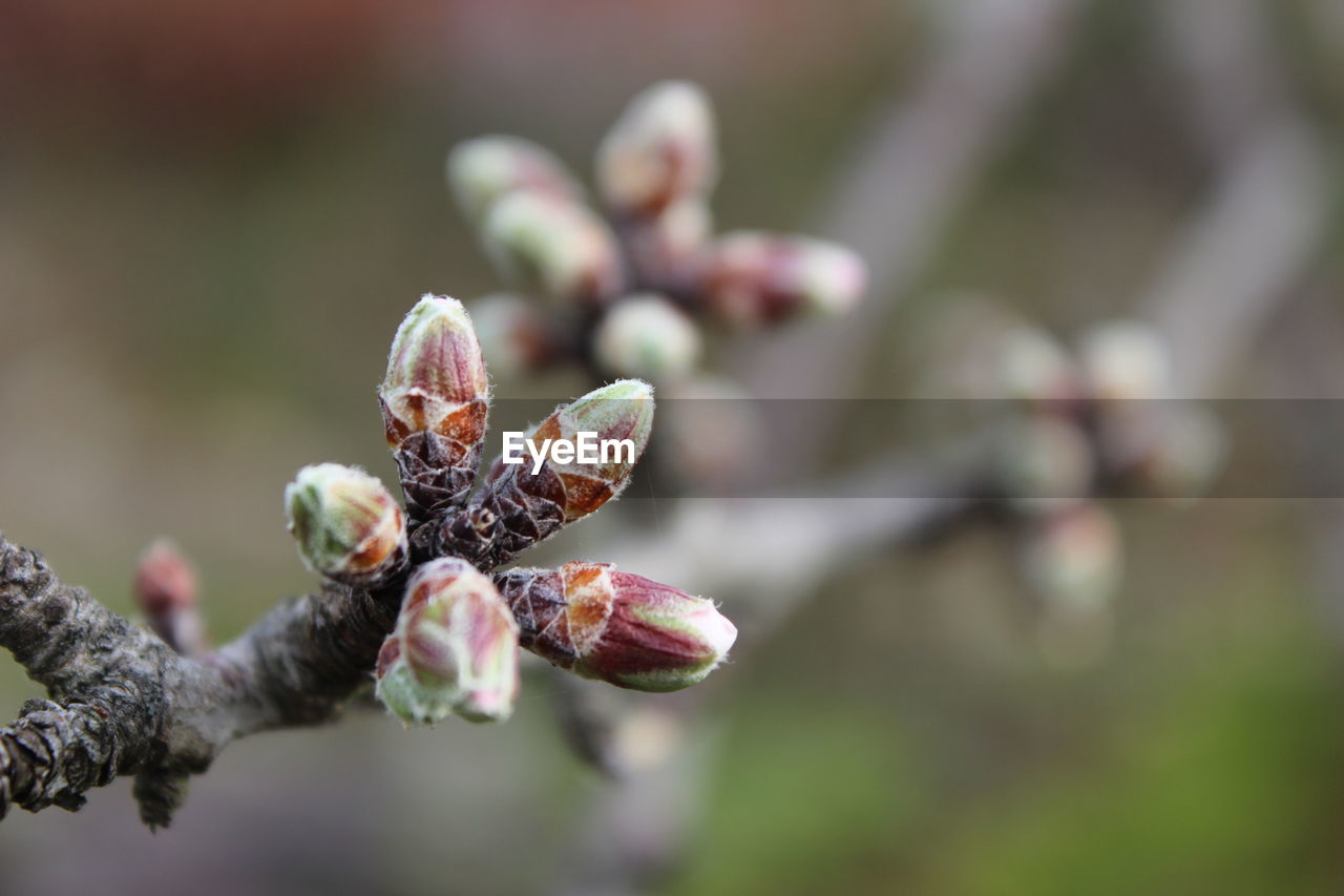 growth, plant, close-up, beauty in nature, freshness, selective focus, flower, focus on foreground, no people, fragility, bud, vulnerability, nature, day, tree, flowering plant, beginnings, new life, branch, food and drink, outdoors