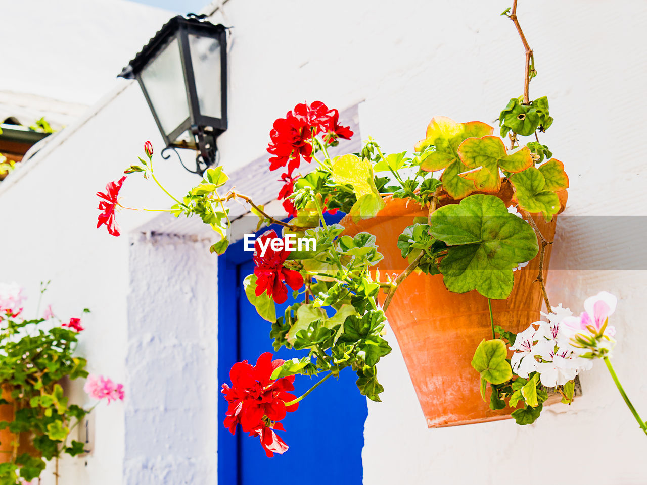 flower, flowering plant, plant, nature, fragility, vulnerability, freshness, no people, beauty in nature, close-up, decoration, multi colored, growth, day, red, petal, potted plant, flower head, inflorescence, leaf, outdoors, flower pot, flower arrangement, bouquet, bunch of flowers