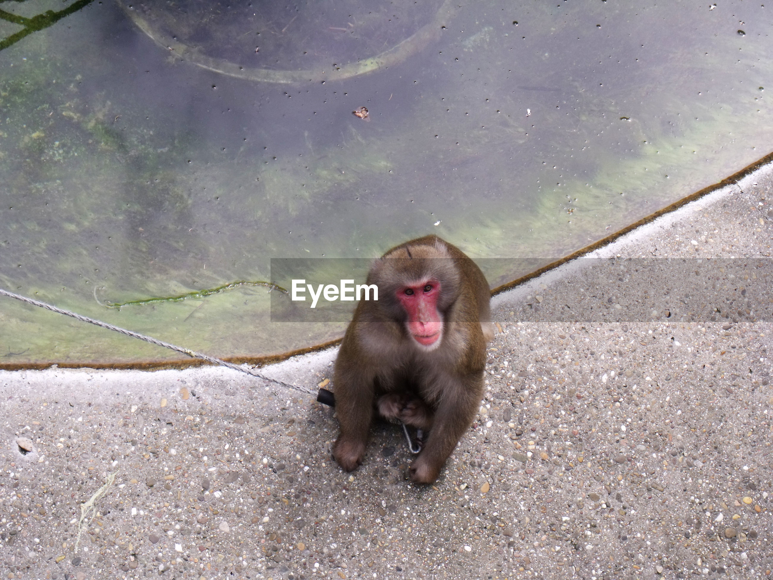Portrait of monkey at zoo