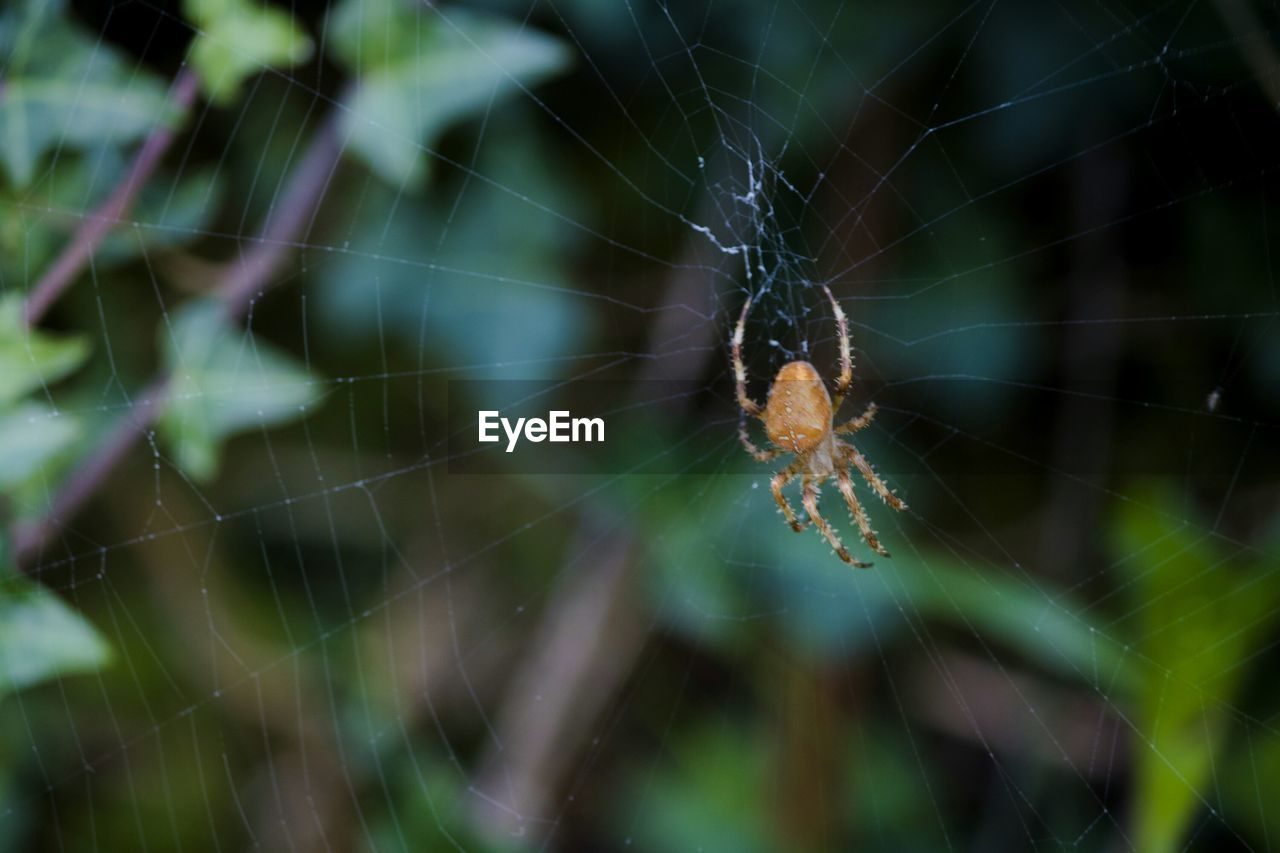 spider web, spider, web, one animal, nature, close-up, fragility, animal themes, no people, outdoors, insect, focus on foreground, animals in the wild, day, beauty in nature