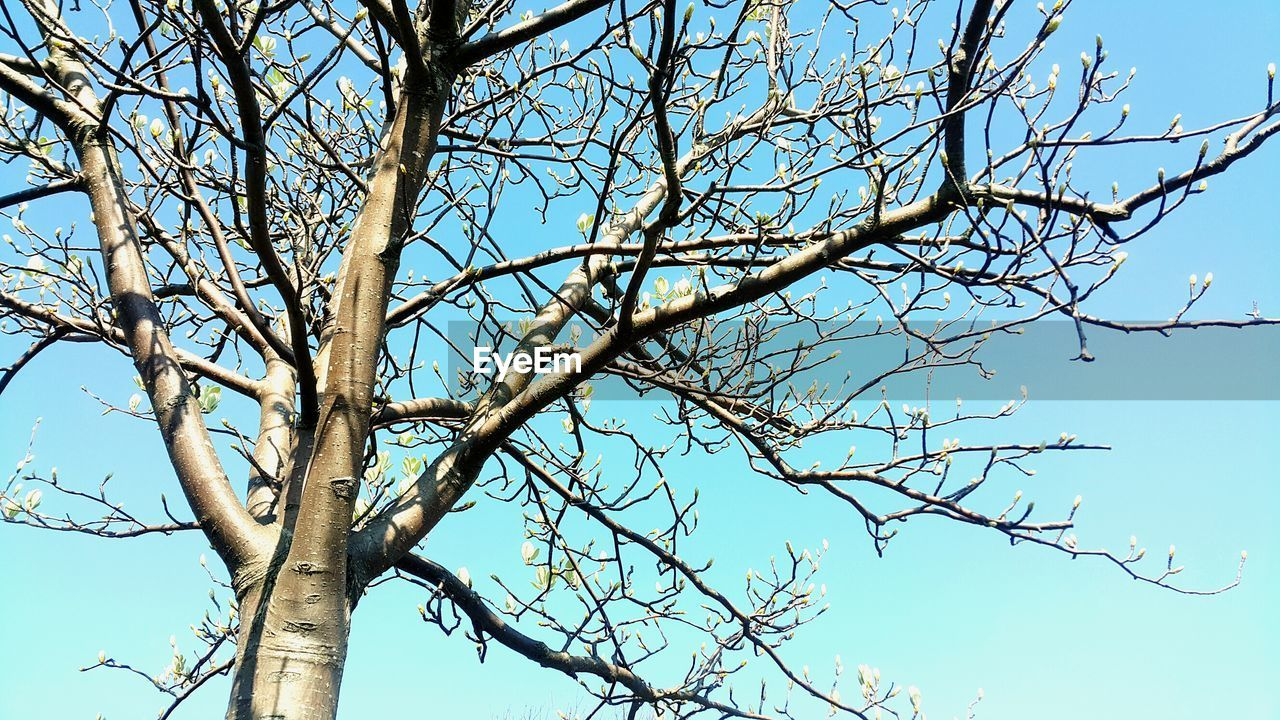 tree, branch, sky, low angle view, bare tree, plant, nature, day, clear sky, no people, blue, beauty in nature, tranquility, outdoors, trunk, tree trunk, sunlight, growth, sunny, dead plant