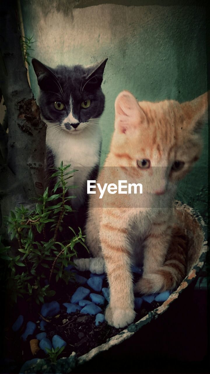 Close-up of two cats looking away