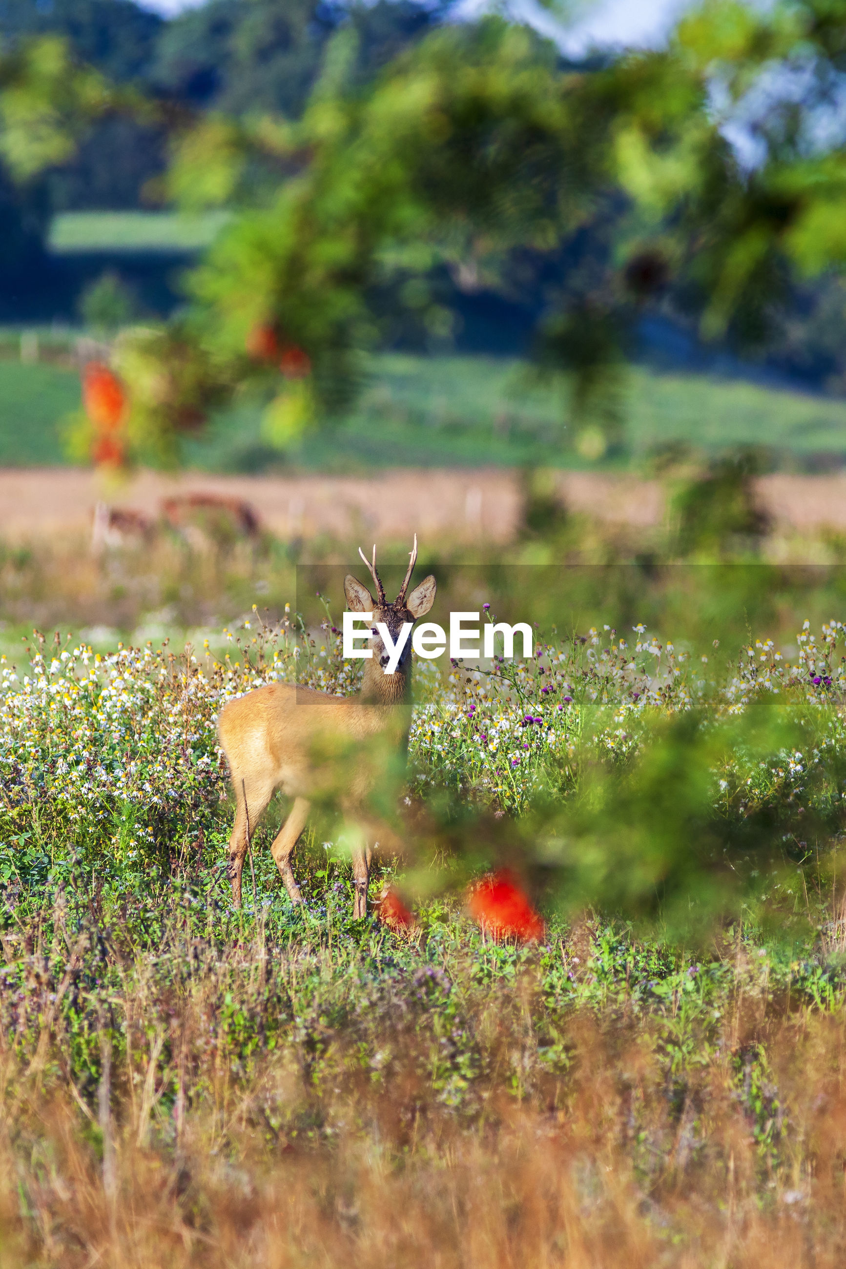VIEW OF DEER ON PLANT
