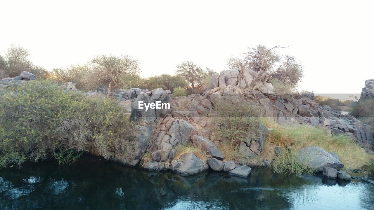 tree, clear sky, river, nature, rock - object, day, outdoors, water, beauty in nature, sky, no people
