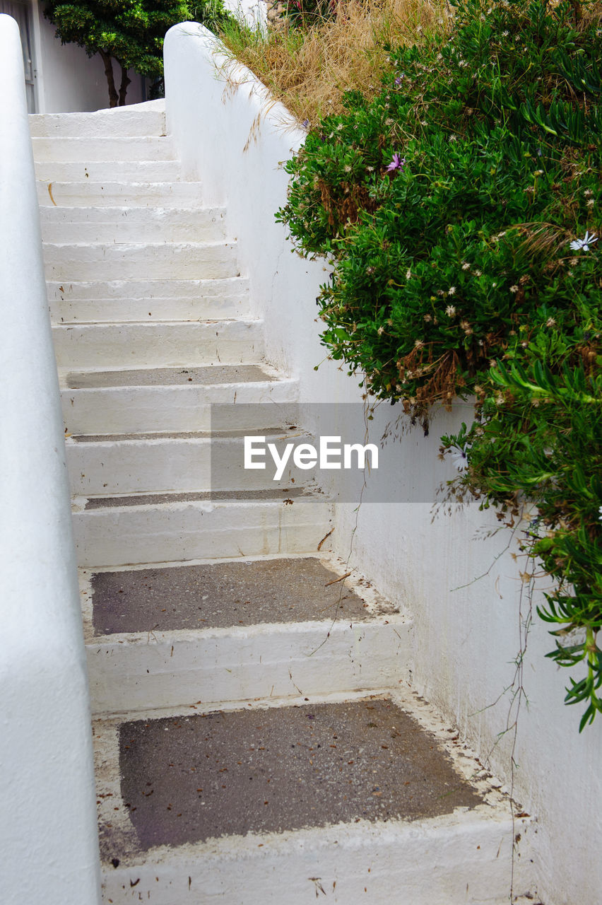 steps, steps and staircases, staircase, railing, stairs, the way forward, no people, growth, day, plant, nature, stairway, outdoors, hand rail, tree
