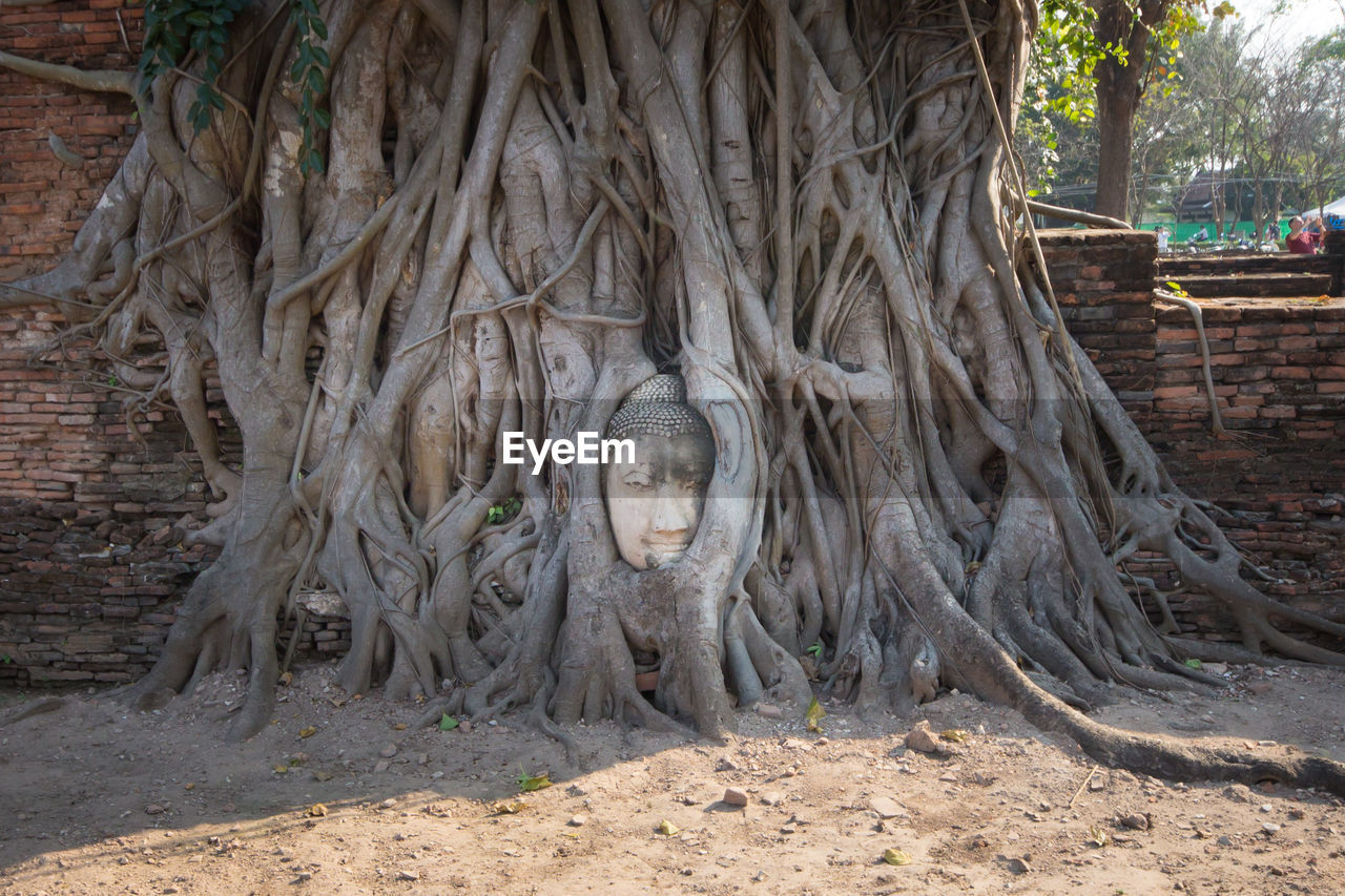 tree, day, root, no people, tree trunk, religion, trunk, plant, nature, land, architecture, spirituality, art and craft, belief, outdoors, representation, sculpture, creativity, built structure, plant part
