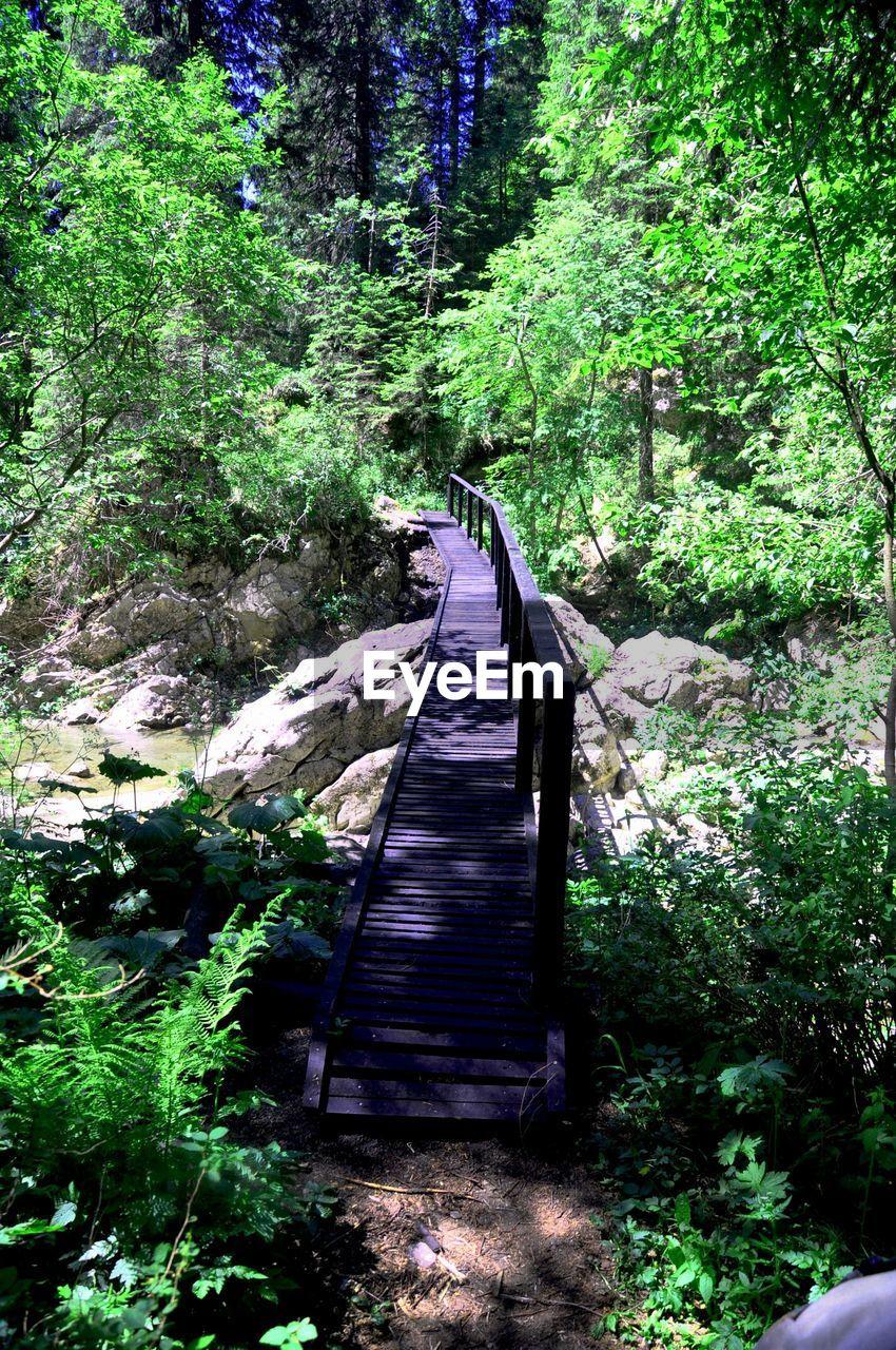 View of narrow footbridge along plants