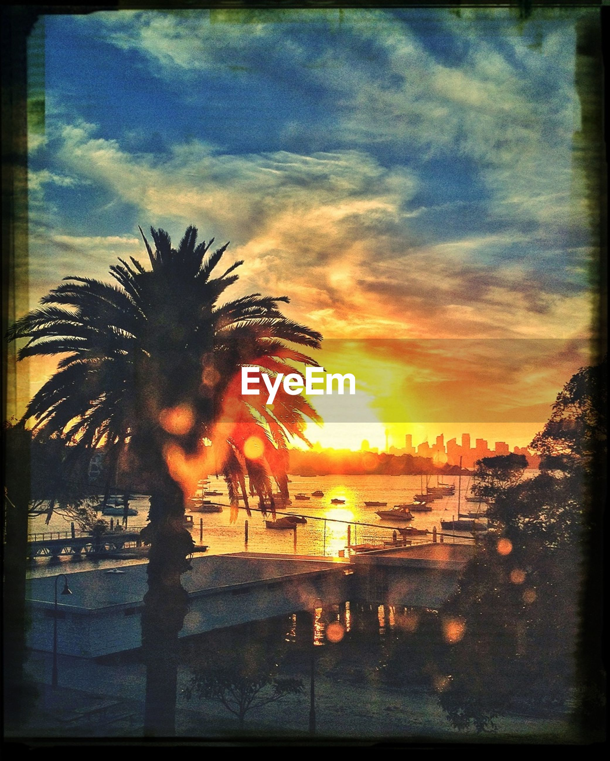 sunset, palm tree, transfer print, sky, tree, water, auto post production filter, cloud - sky, silhouette, scenics, tranquility, beauty in nature, orange color, tranquil scene, sun, nature, sea, cloud, reflection, idyllic