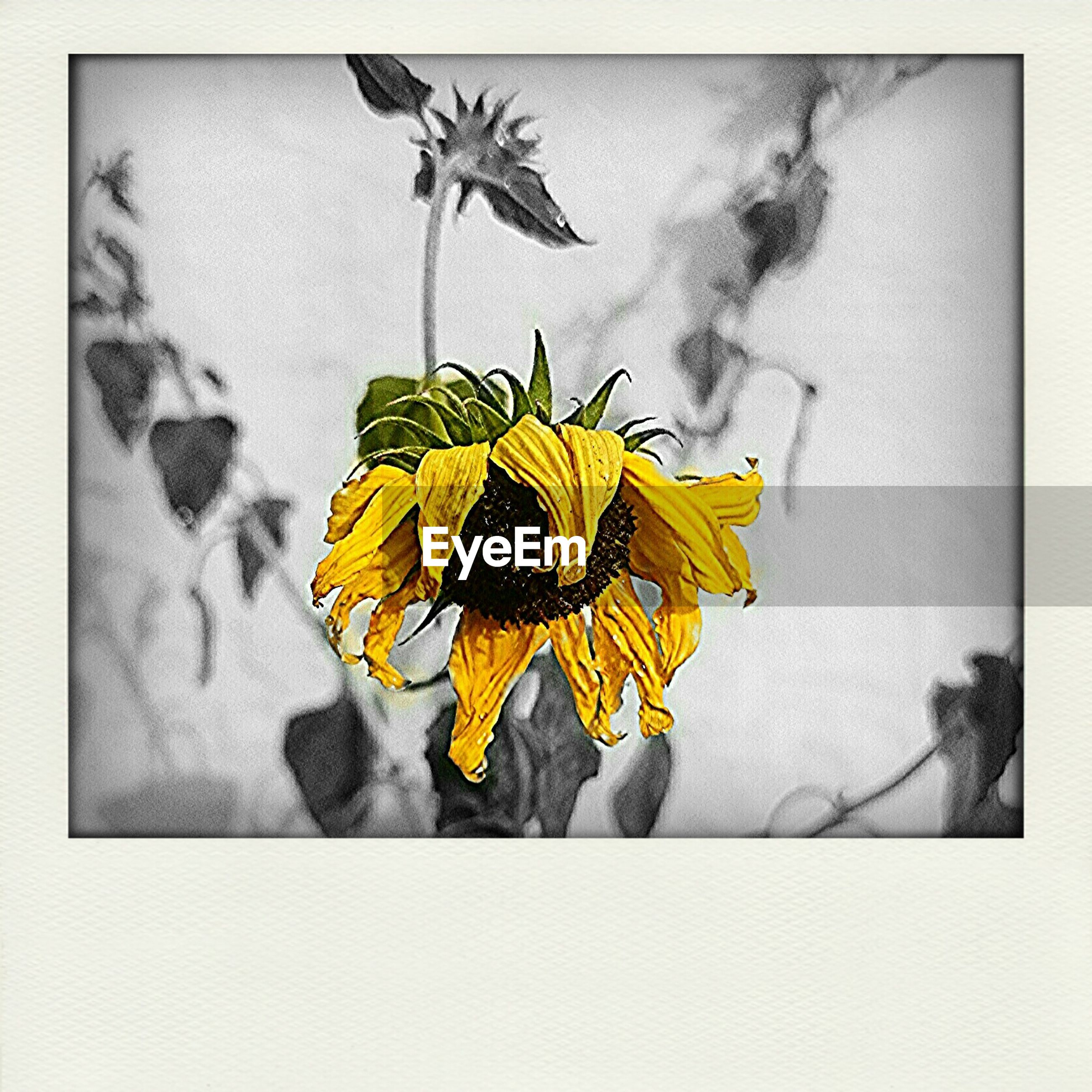 transfer print, flower, yellow, auto post production filter, art and craft, art, petal, wall - building feature, creativity, close-up, indoors, fragility, flower head, nature, beauty in nature, no people, freshness, wall, low angle view, day