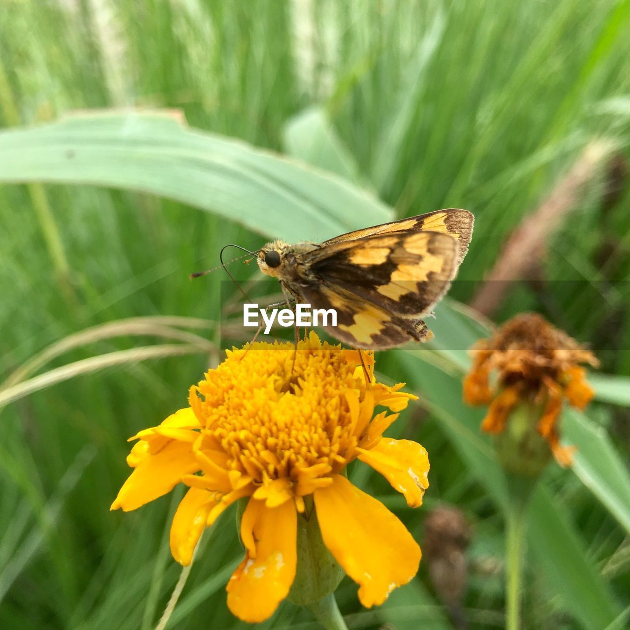 flower, flowering plant, animal wildlife, animal, animal themes, plant, invertebrate, insect, animals in the wild, one animal, beauty in nature, fragility, vulnerability, animal wing, freshness, close-up, growth, butterfly - insect, petal, flower head, no people, pollination, outdoors, butterfly