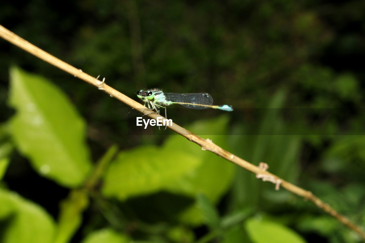 animal themes, animal, animals in the wild, one animal, animal wildlife, plant, invertebrate, green color, insect, close-up, day, nature, no people, focus on foreground, damselfly, selective focus, plant part, animal wing, growth, leaf, outdoors, blade of grass