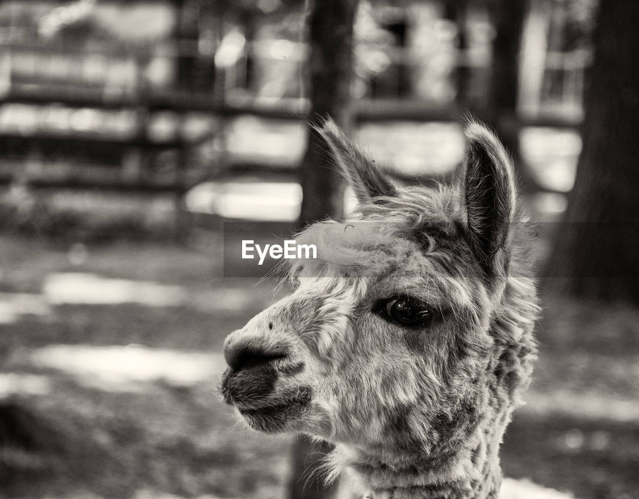 one animal, animal themes, focus on foreground, mammal, domestic animals, domestic, animal, pets, vertebrate, animal body part, close-up, day, animal head, looking away, looking, no people, animal hair, dog, canine, portrait