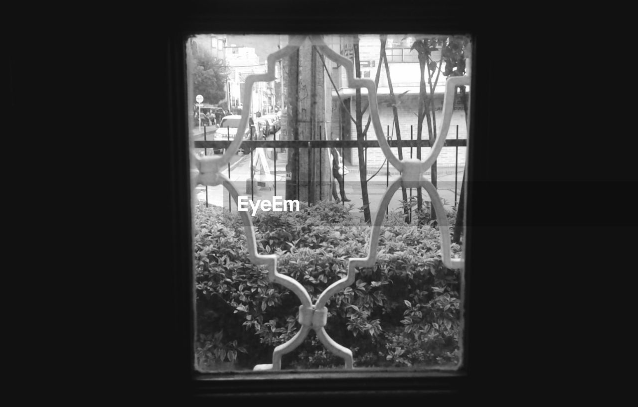 window, growth, day, no people, indoors, plant, tree, architecture, close-up, nature, greenhouse, freshness