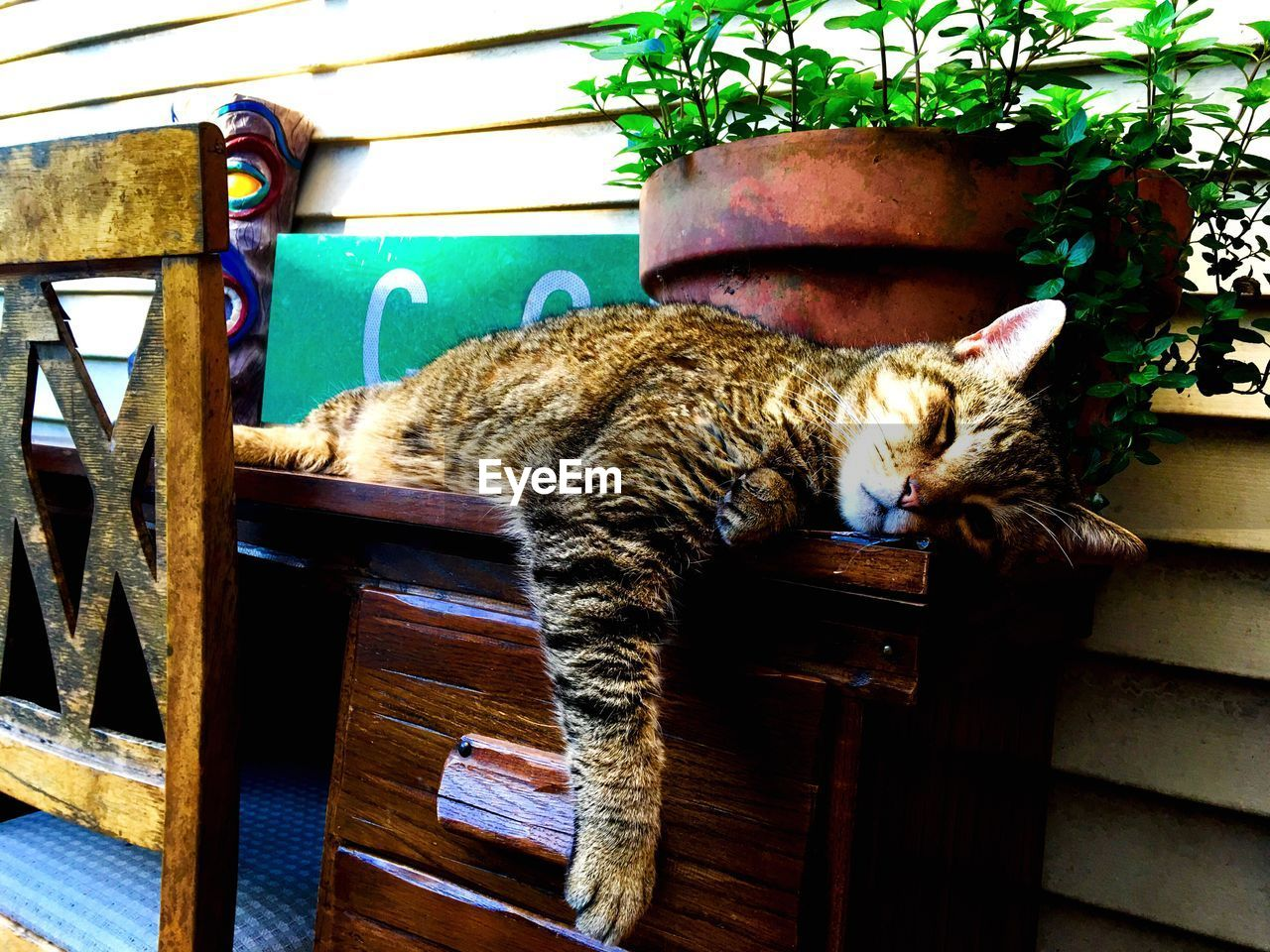 domestic cat, animal themes, cat, domestic animals, one animal, mammal, feline, pets, sleeping, relaxation, no people, day, lying down, indoors