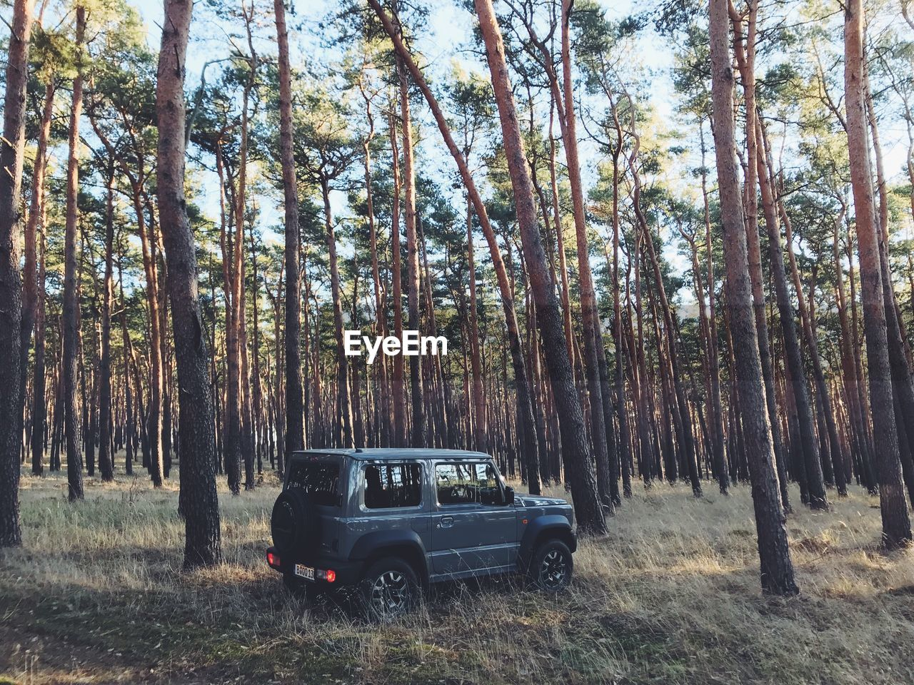 tree, plant, forest, land, mode of transportation, motor vehicle, car, nature, trunk, transportation, tree trunk, day, woodland, land vehicle, growth, outdoors, landscape, field, non-urban scene, no people, sports utility vehicle