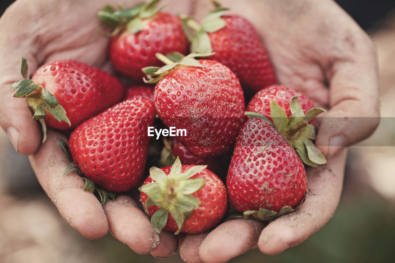 Cropped Hands Showing Strawberries
