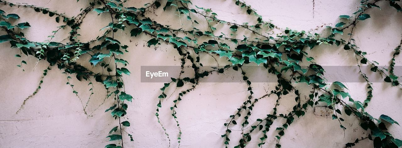 Full frame shot of plants growing on wall