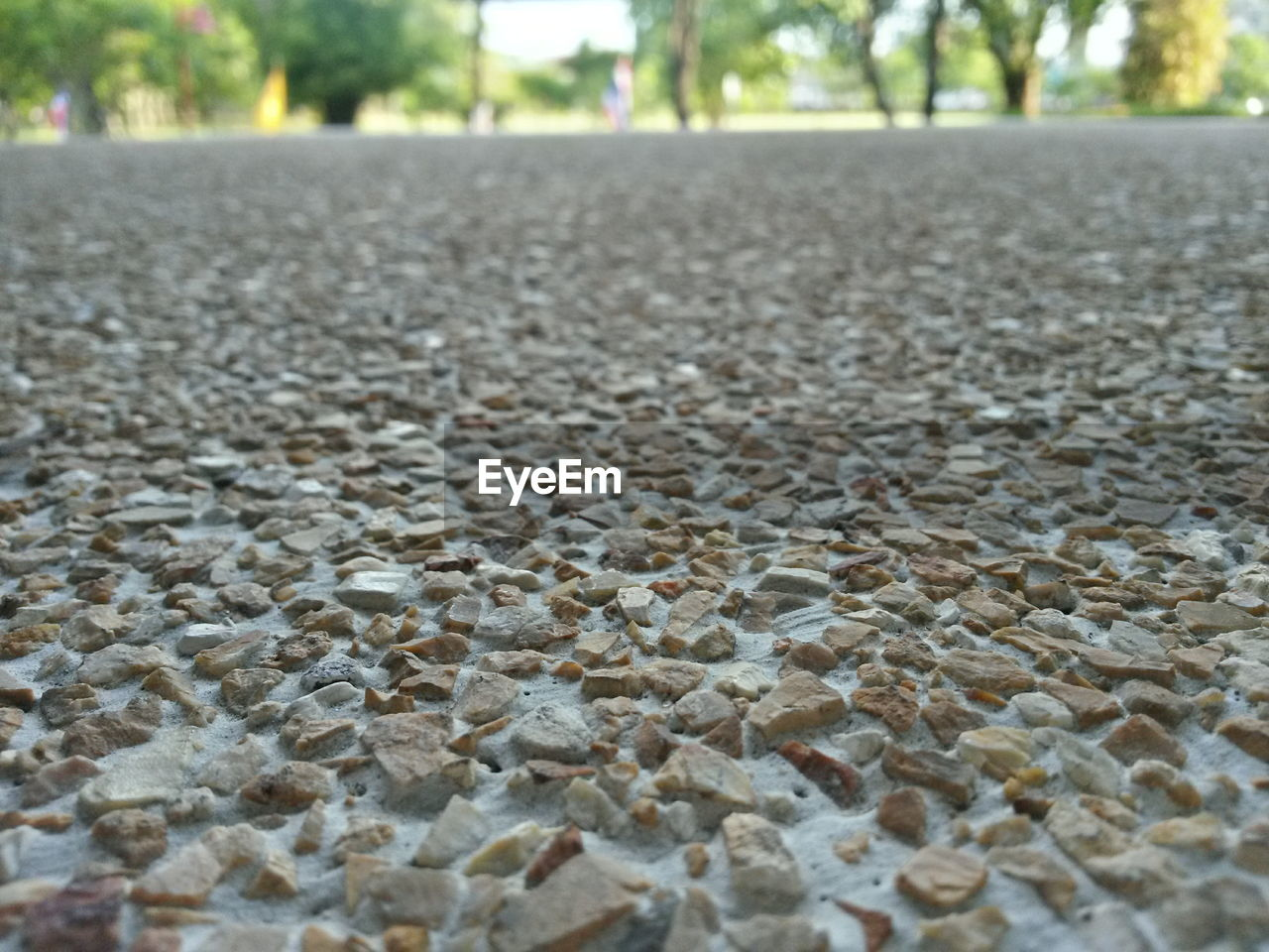 surface level, day, focus on foreground, no people, textured, outdoors, nature, close-up, tree