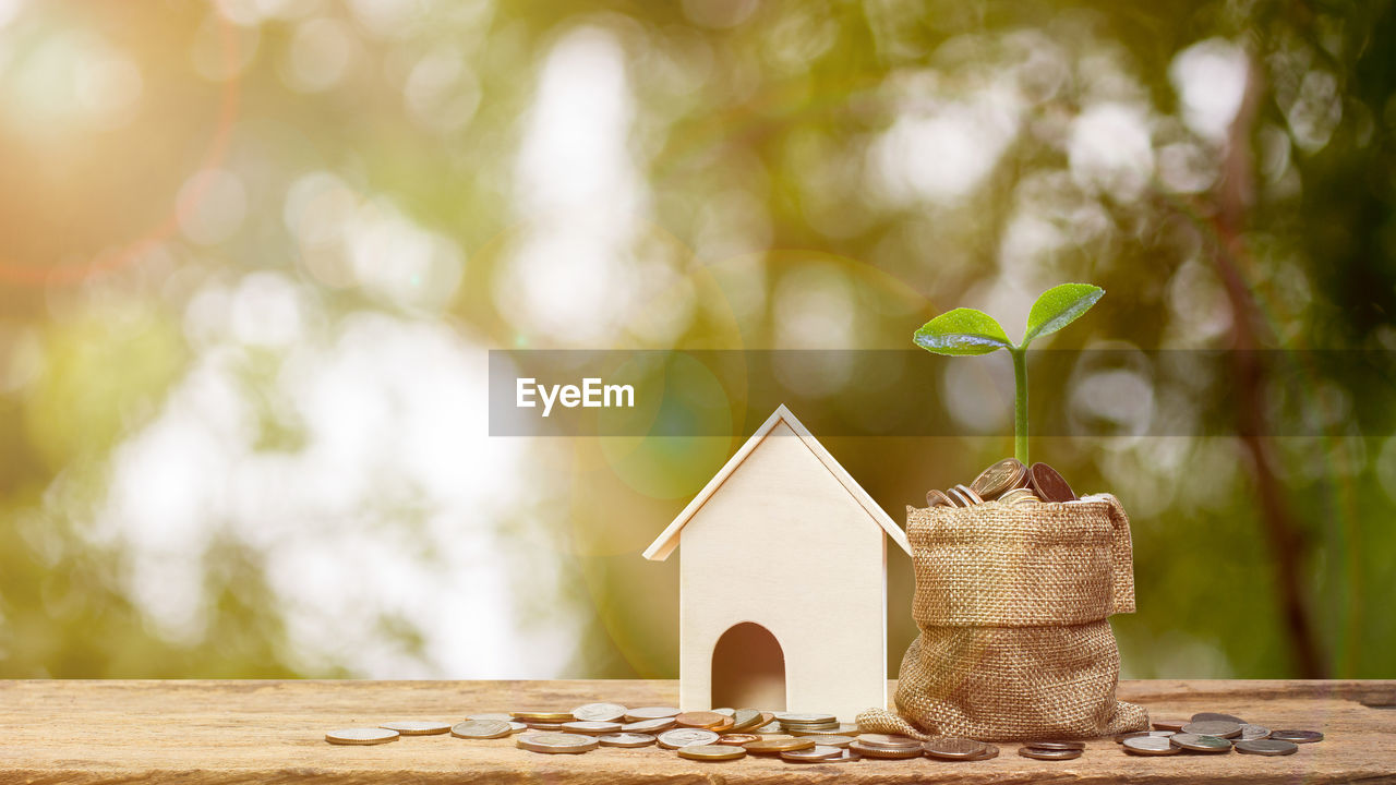 focus on foreground, table, plant, day, nature, no people, growth, leaf, plant part, close-up, wood - material, selective focus, tree, finance, outdoors, green color, sunlight, architecture, small, still life