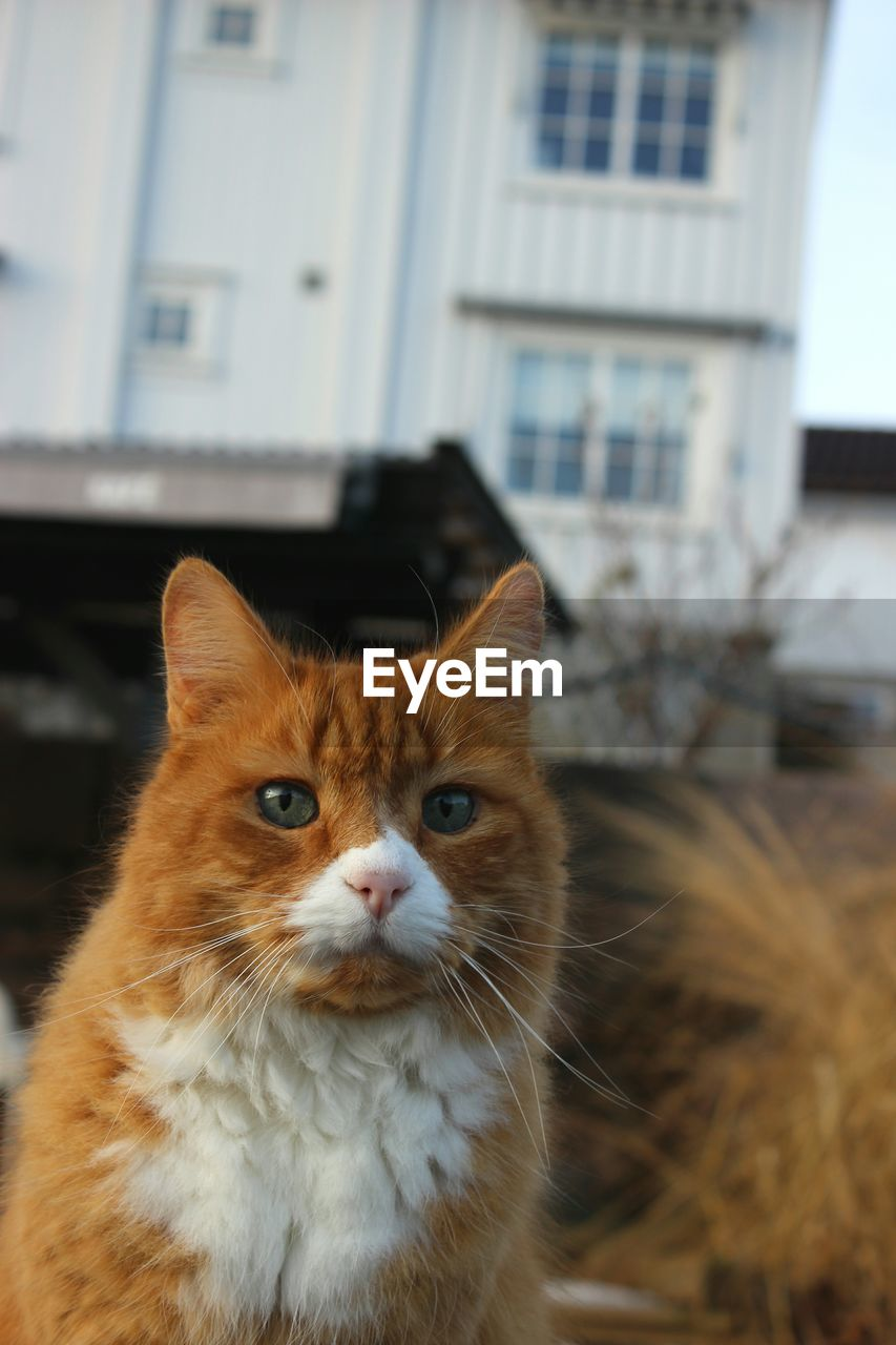 cat, domestic cat, feline, pets, domestic, mammal, animal, animal themes, one animal, domestic animals, looking at camera, focus on foreground, built structure, building exterior, portrait, vertebrate, architecture, no people, day, whisker, animal head, animal eye