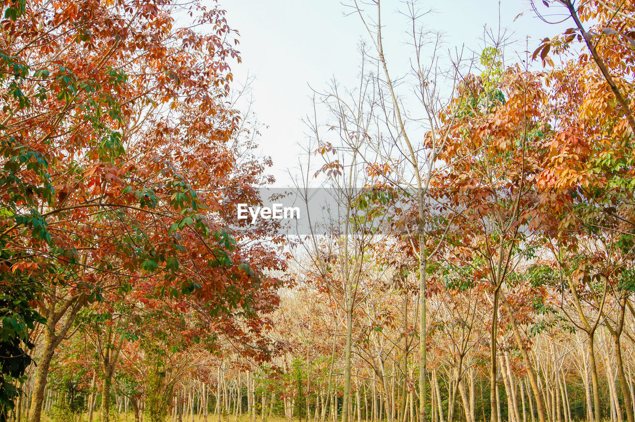 autumn, tree, nature, leaf, change, growth, tranquility, beauty in nature, tranquil scene, outdoors, no people, day, scenics, plant, grass, sky