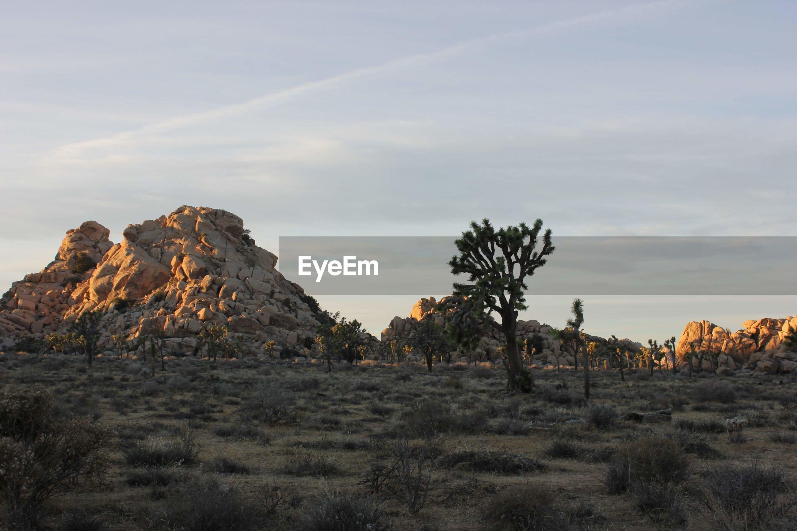 The joshua tree desert at dusk