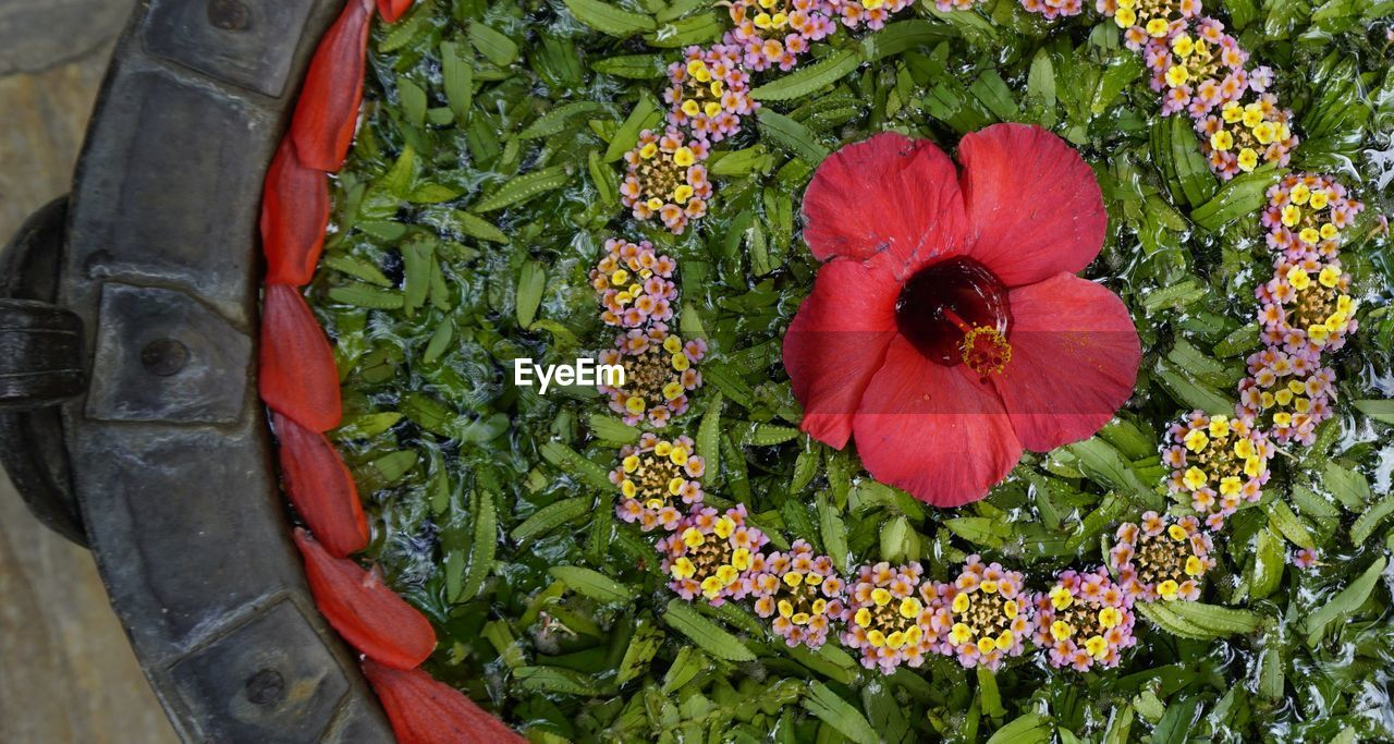 flower, growth, plant, beauty in nature, freshness, fragility, nature, outdoors, day, no people, flower head, green color, red, petal, field, blooming, close-up, poppy