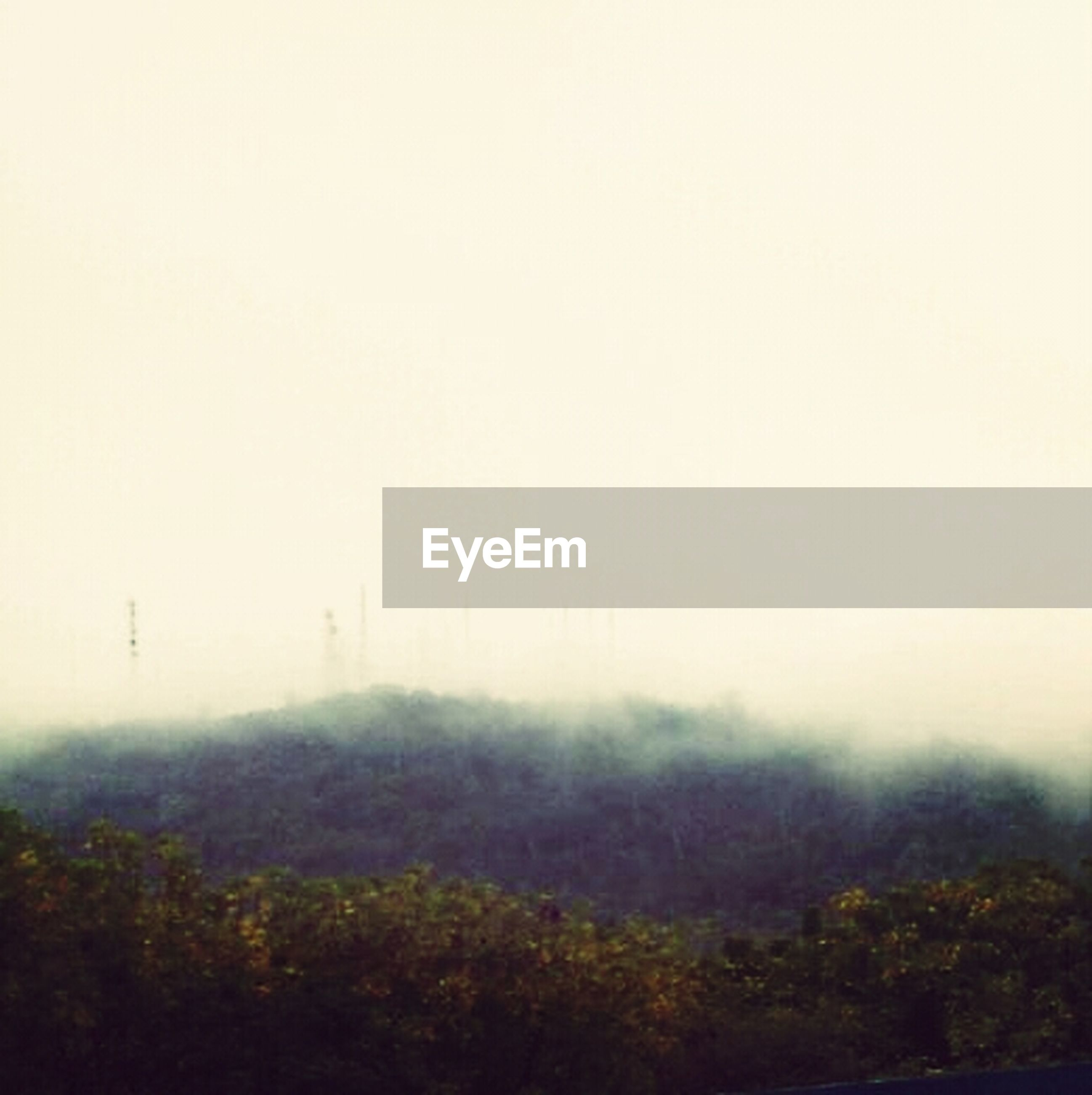 fog, foggy, weather, tree, copy space, tranquility, tranquil scene, mist, beauty in nature, nature, landscape, scenics, growth, day, non-urban scene, outdoors, field, no people, idyllic
