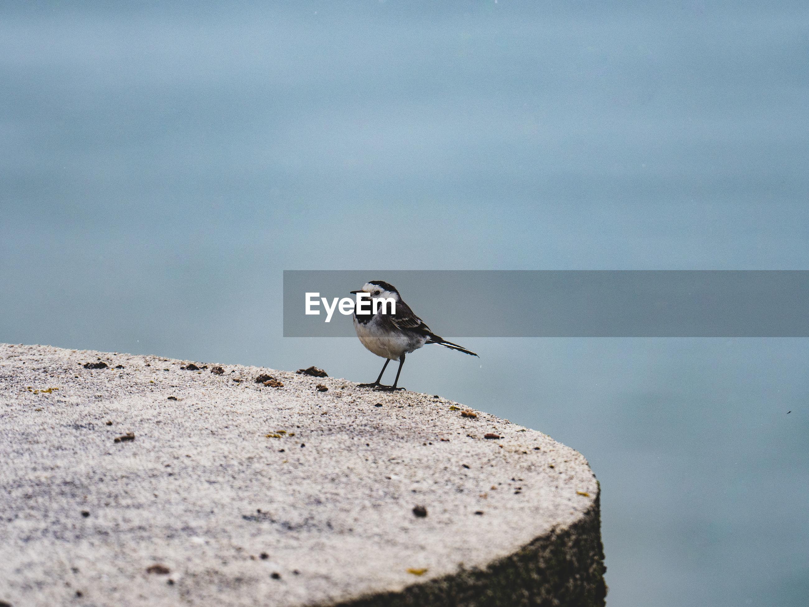BIRDS PERCHING ON A WALL