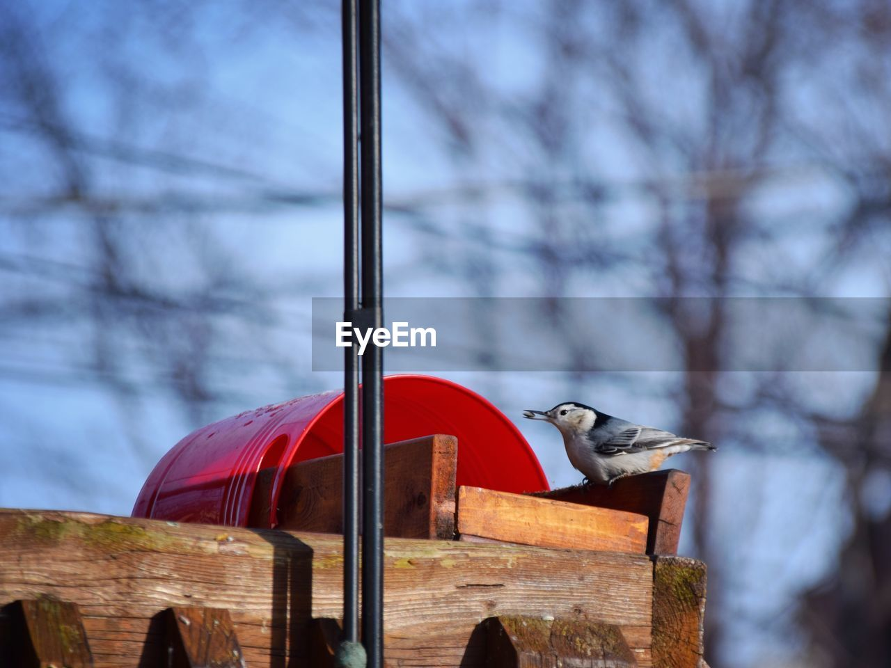 vertebrate, bird, animal, animal themes, tree, one animal, animal wildlife, no people, animals in the wild, nature, day, built structure, architecture, focus on foreground, perching, low angle view, wood - material, sky, outdoors